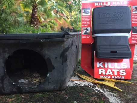 Rid Your Home of Unwanted Critters