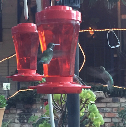 Hummingbirds are the ultimate exercisers!