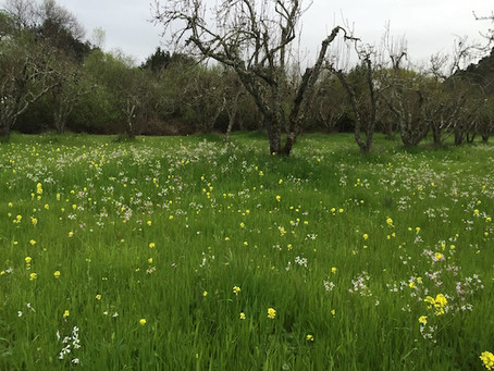 Cultivate a Wildflower Meadow