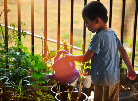If They Grow It, They Will Eat It - 3 Tips For Pre-School Edible Gardens