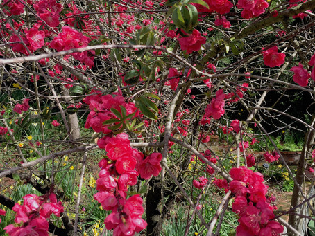 Winter Awakens to Spring