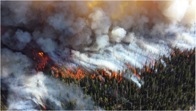 California is burning