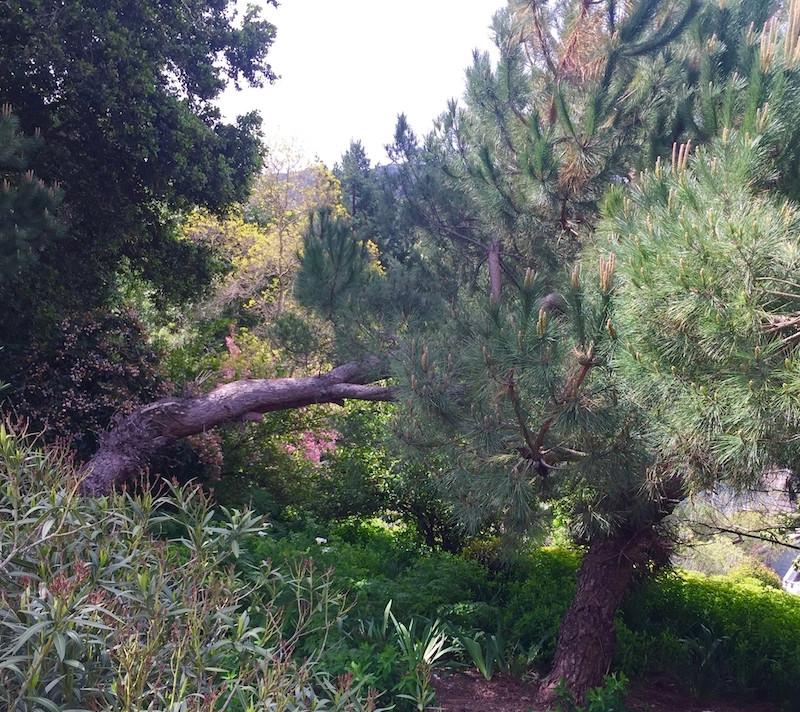 Trees Form alliances