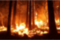 wildfire 4.png