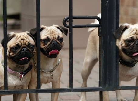 Dog Proof Fencing - Yard Containment For Your Canine
