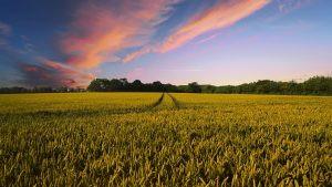 Οι αγρότες χρειάζονται όραμα!