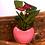 Thumbnail: Anthurium rouge cœur ROSE