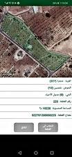 مزرعة للبيع بسعر مغري منظمة مزروعة شجر زيتون و خوخ و لوز و عنب