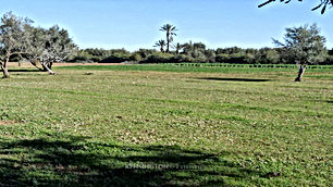 أرض في الضليل بمساحة ١٢٠٠ متر مربع على الشارع الرئيسي مقابل مسجد الحربي