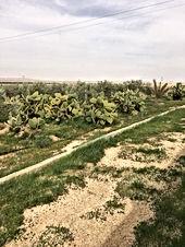 مزرعه 13 دونم مثمره بالزيتون للبيع ام البدل