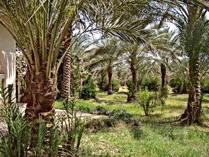 مزرعه 10دنم فيها 300شجرة زيتون مشيكه كامل على شارعين للبيع