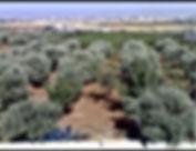 أرض زراعية للبيع في مادبا 10 دونم من المالك مباشرة