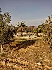 مزرعة في مادبا 28 دونم و نص للبيع مزروعة بالزيتون