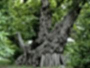 فرصه استثماريه كبرى لمشروع زراعي للاشجارالمعمره