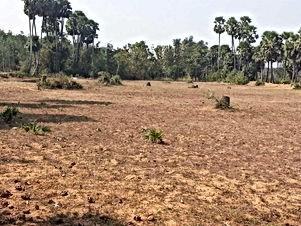 ارض للبيع على شارعين مشيكة ومزروعة عنب من المالك مباشرة في مادبا طريق منجا