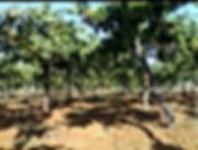 أرض زراعية 10دنم في مأدبا الغربية مع بئر ماء وفيلا نظام أمريكي