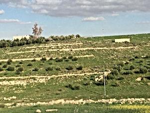 قطعة ارض مزروعة زيتون في ذيبان 18 دونم مفروزة كل 9 دونمات على شارع رئيسي واصل جميع الخدمات