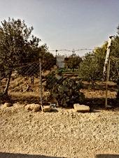 مزرعة زيتون للبيع 28 دونم ونصف الدونم