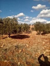 اراضي جرش 5 دنم غرب جرش منطقه الفواره ارض مميزه للبيع