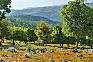 أرض للبيع بمحافظة عجلون بمنطقة اوصرة عشرة دونمات الارض زراعية