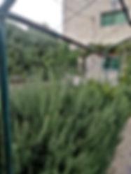 مزرعه 6 دنمات ونص مع بيت طابقين ونص في مادبا