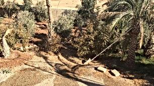 مزرعه بعد جسر مادبا ب6 كيلو دونم و115متر فيها بيت 100م  للبيع