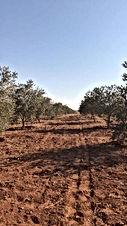 مزرعة ١٠ دونم للبيع مزروعة ٣٠٠ شجرة زيتون وفيها بير ماء مشيكة بالكامل على شارعين
