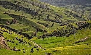 أرض للبيع بمحافظة عجلون بمنطقة اوصرة ابوالحمص مساحة 10دونمات