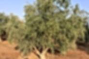 مزرعه مشيكه ومشجره حديث عالية ومشرفة وعلى شارع معبد بقوشان مستقل للبيع