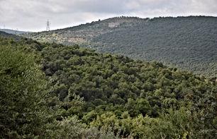 ارض للبيع مساحة 10 دونمات (مستويه ) في منطقة برقش السياحيه للبيع