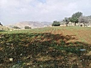 ارض للبيع في ابو السوس قريب من دوار البيادر الصناعيه