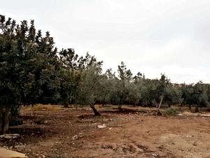 أرض للبيع شرق عمان وادي العش على شارع المية