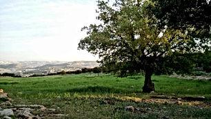 أرض للبيع 3677 متر مربع في السلط منطقة جلعاد من المالك