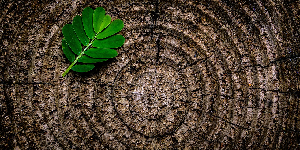 Find Balance: Ayurveda for Modern Life