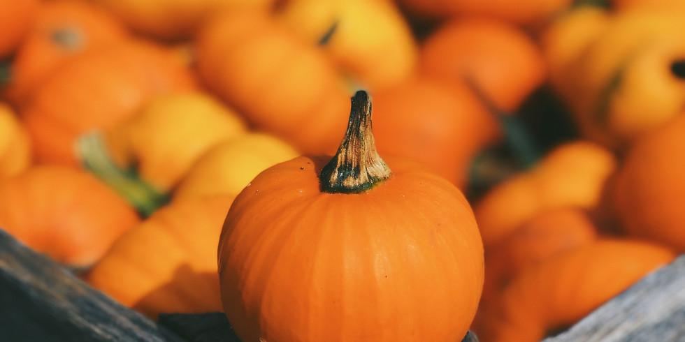 Family Fun! Paint a Mini Pumpkin