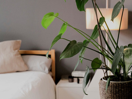 BEST PLANTS FOR SLEEP