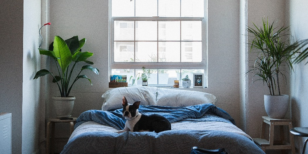 Fill Your Space with Purpose: Plants for Sleep