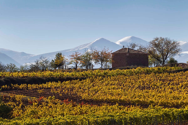 Rioja Alta Cordovin 05.jpg