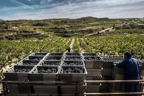 Rioja Alta San Vicente 16.jpg