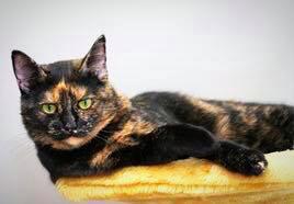 La Leyenda de los gatos CAREY