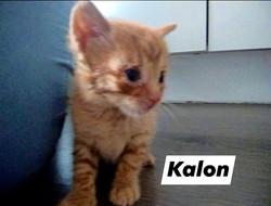 KALON- Macho mes y medio