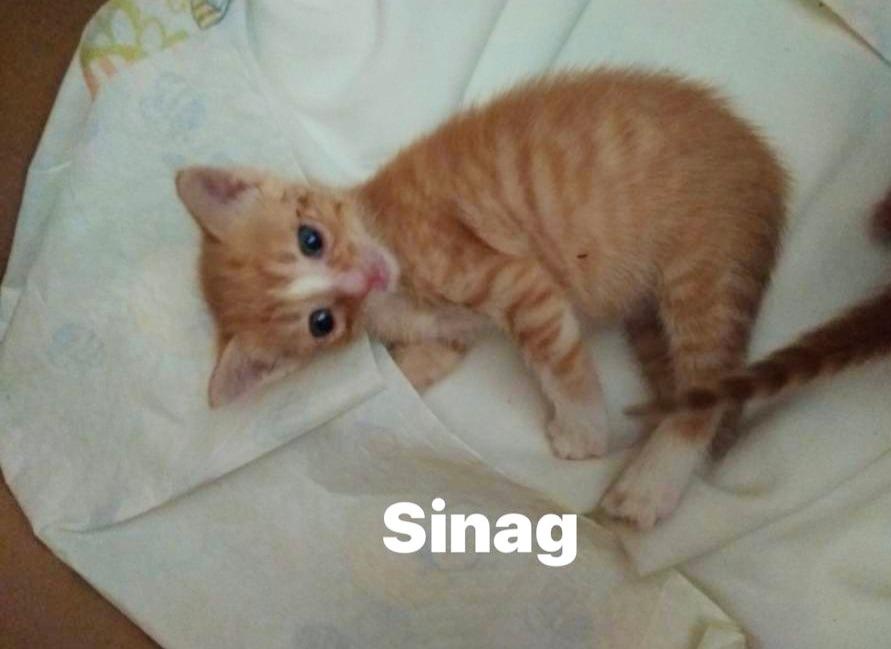 SINAG- Macho mes y medio