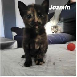 Jazmin- 2 meses