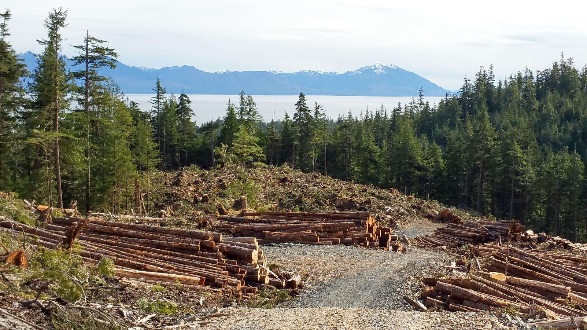Logging Site Overlooking Inside Passage