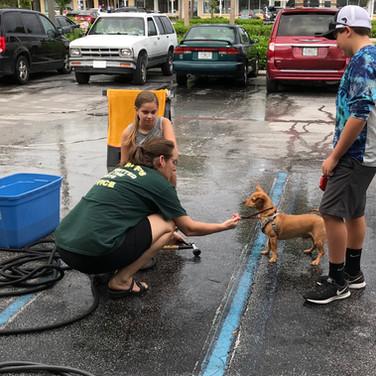 SNIP Dog Wash 11/3/18