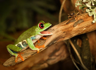 feeding-pet-frog.jpg