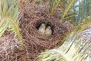 quaker nest.jpg