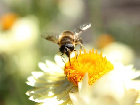 "University's Secret Garden Society creates ""Bugtropolis"" project in campus"