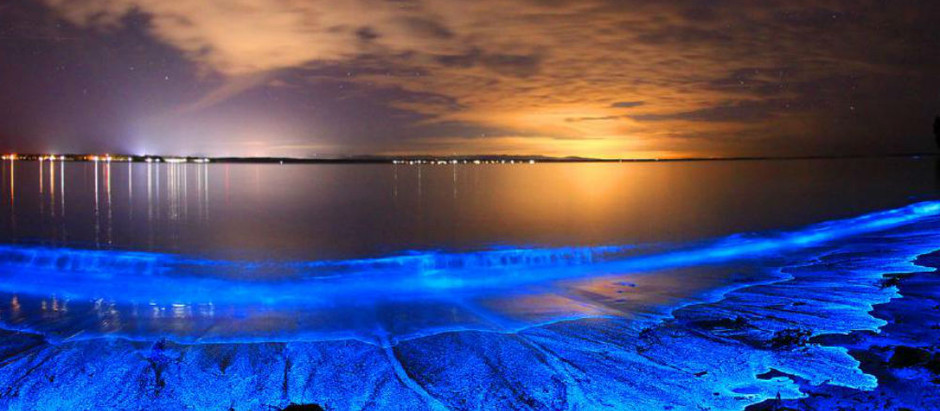 Experience the Magic of Nature - Bioluminescence Waves Breaking across SoCal
