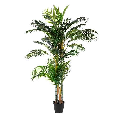 Planta Palmera Areca
